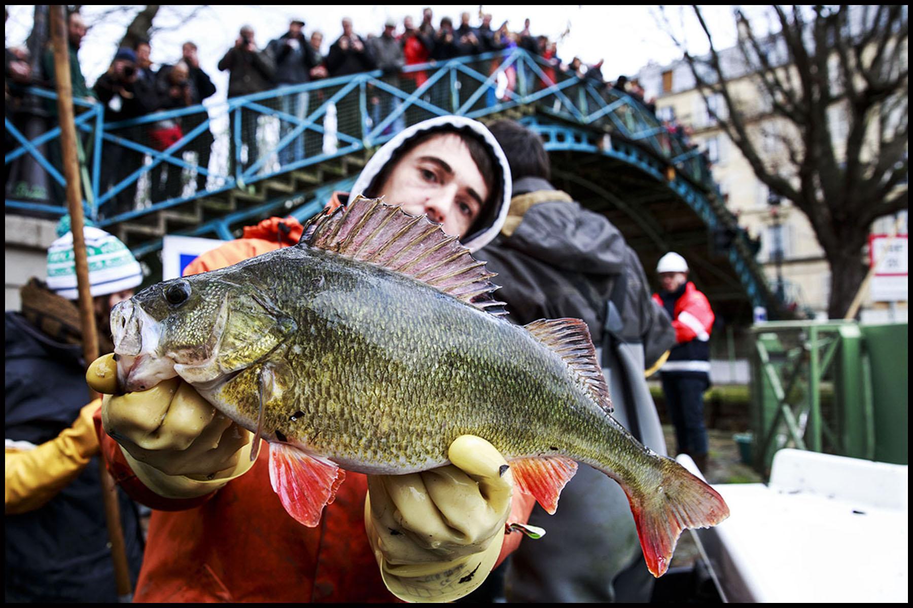 Pêche miraculeuse dans le canal St Martin avant qu'il ne soit complètement vidé pour la réparation de ses écluses.
