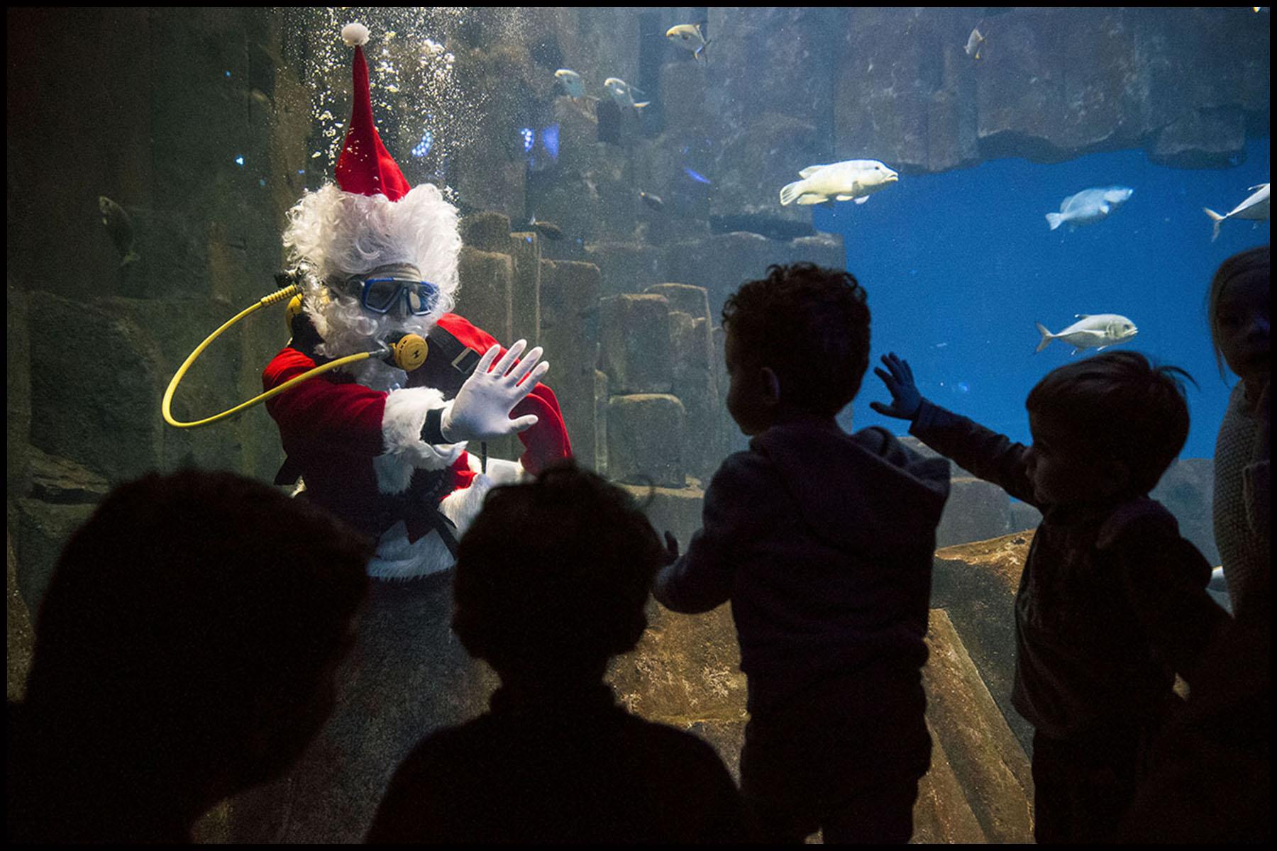 Le père Noël plonge avec les poissons exotiques de l'Aquarium de Paris.