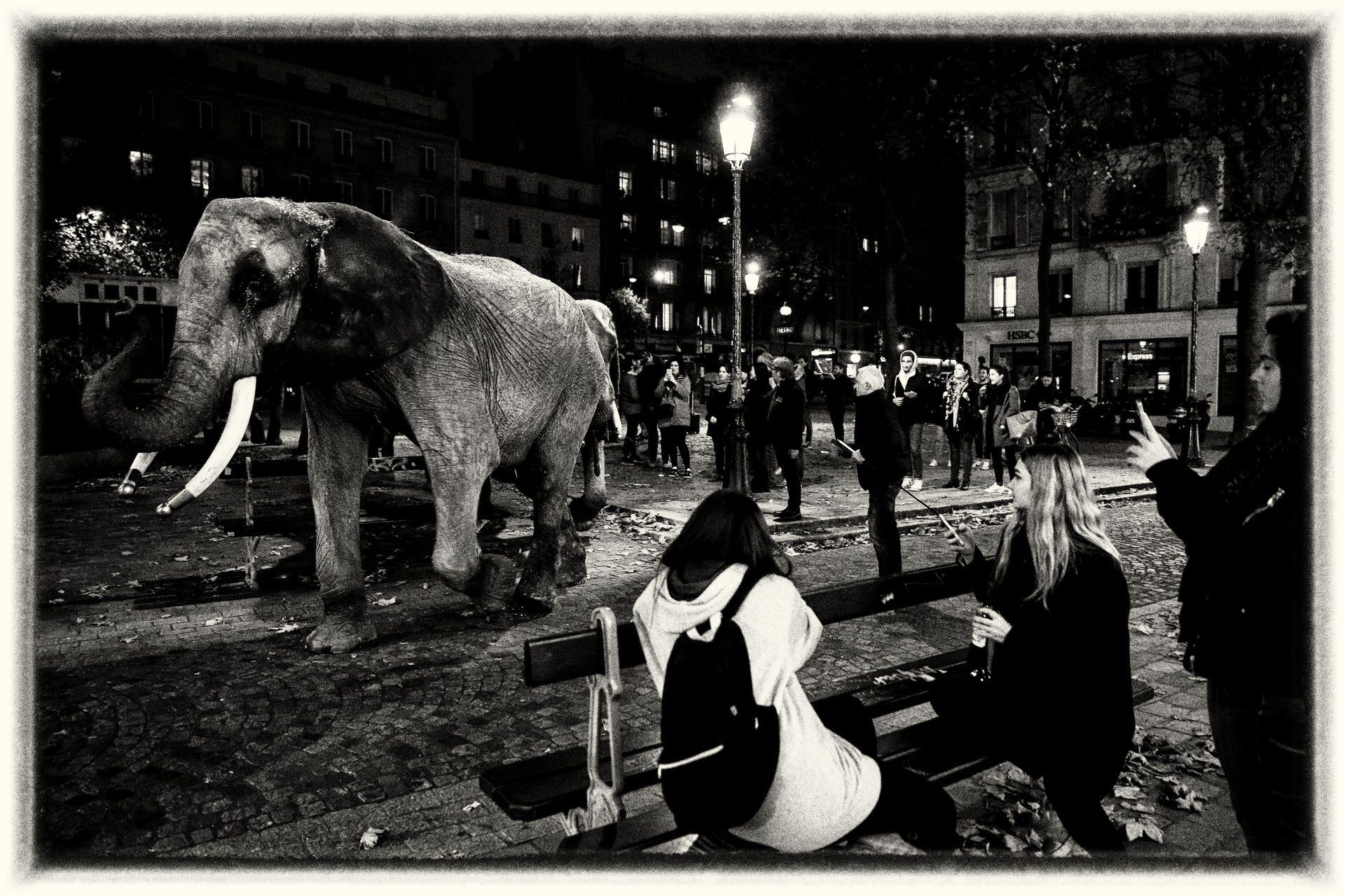 Des Bêtes