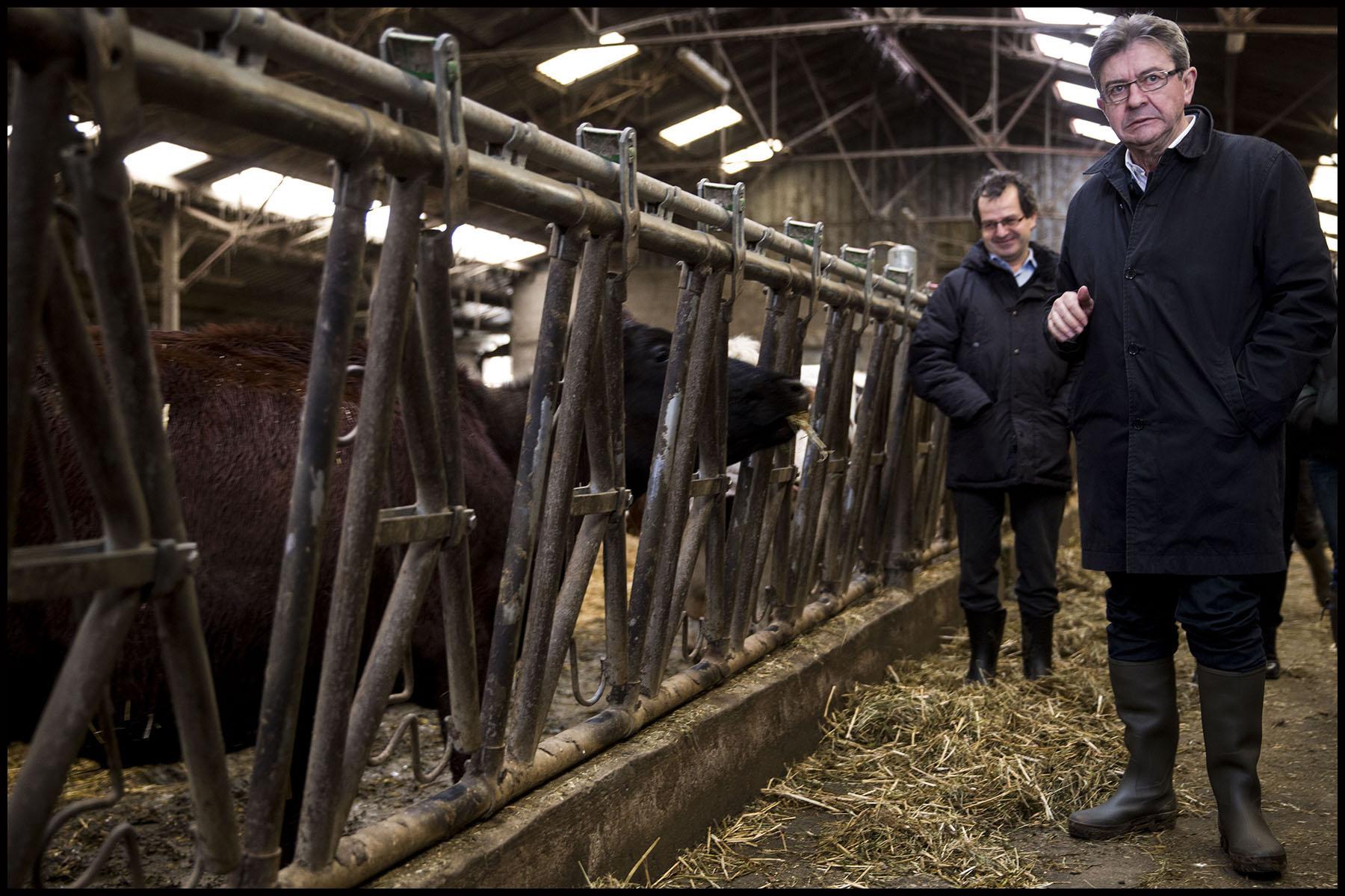 Déplacement de Jean-Luc MELENCHON sur le thème de l'agriculture, à la ferme laitière des Bayottes dans l'Oise.